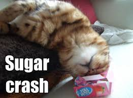 cat and sugar crash