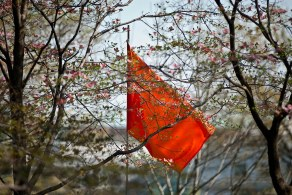 single orange flag CC